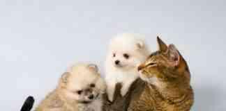 desparasitarios naturales para perro