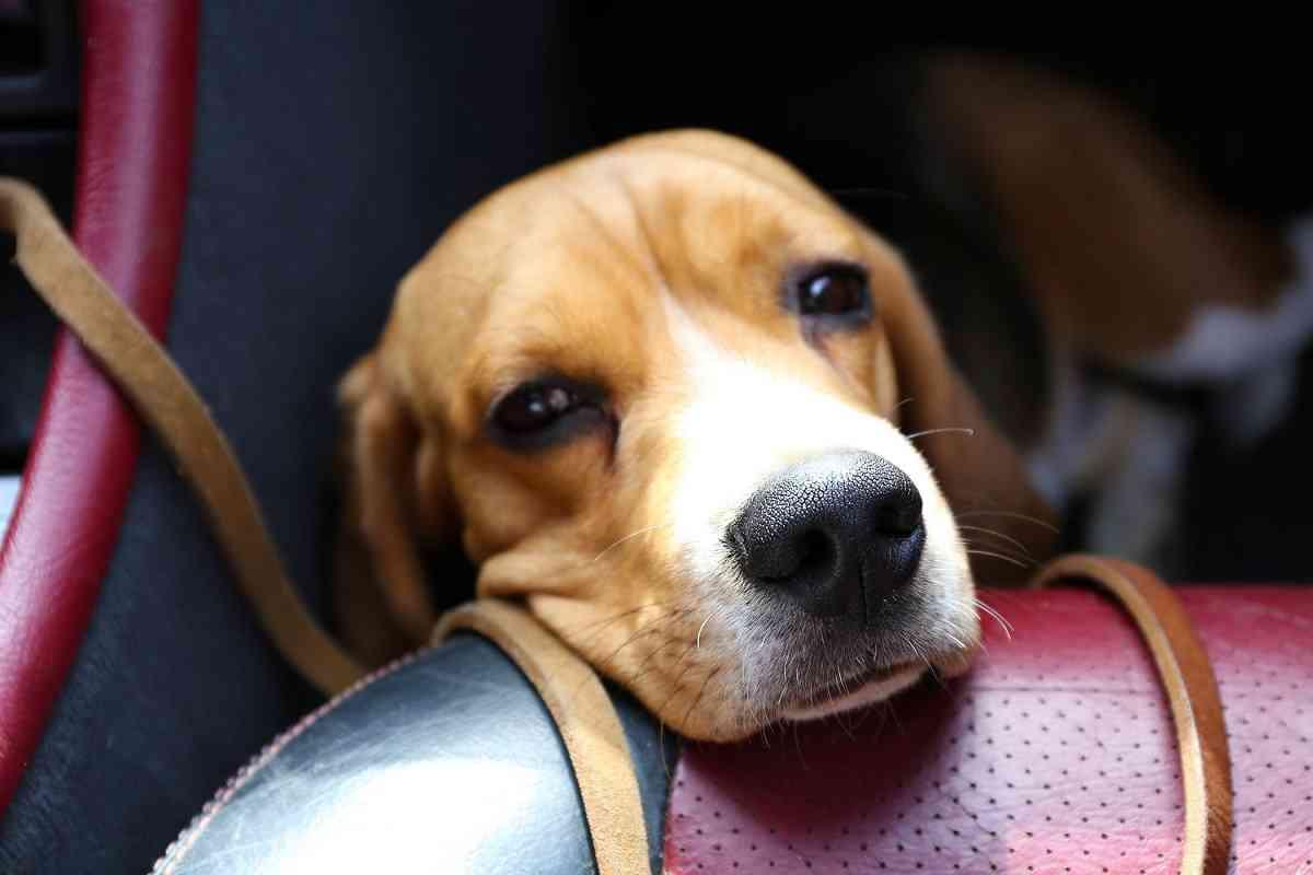 mareo en perros