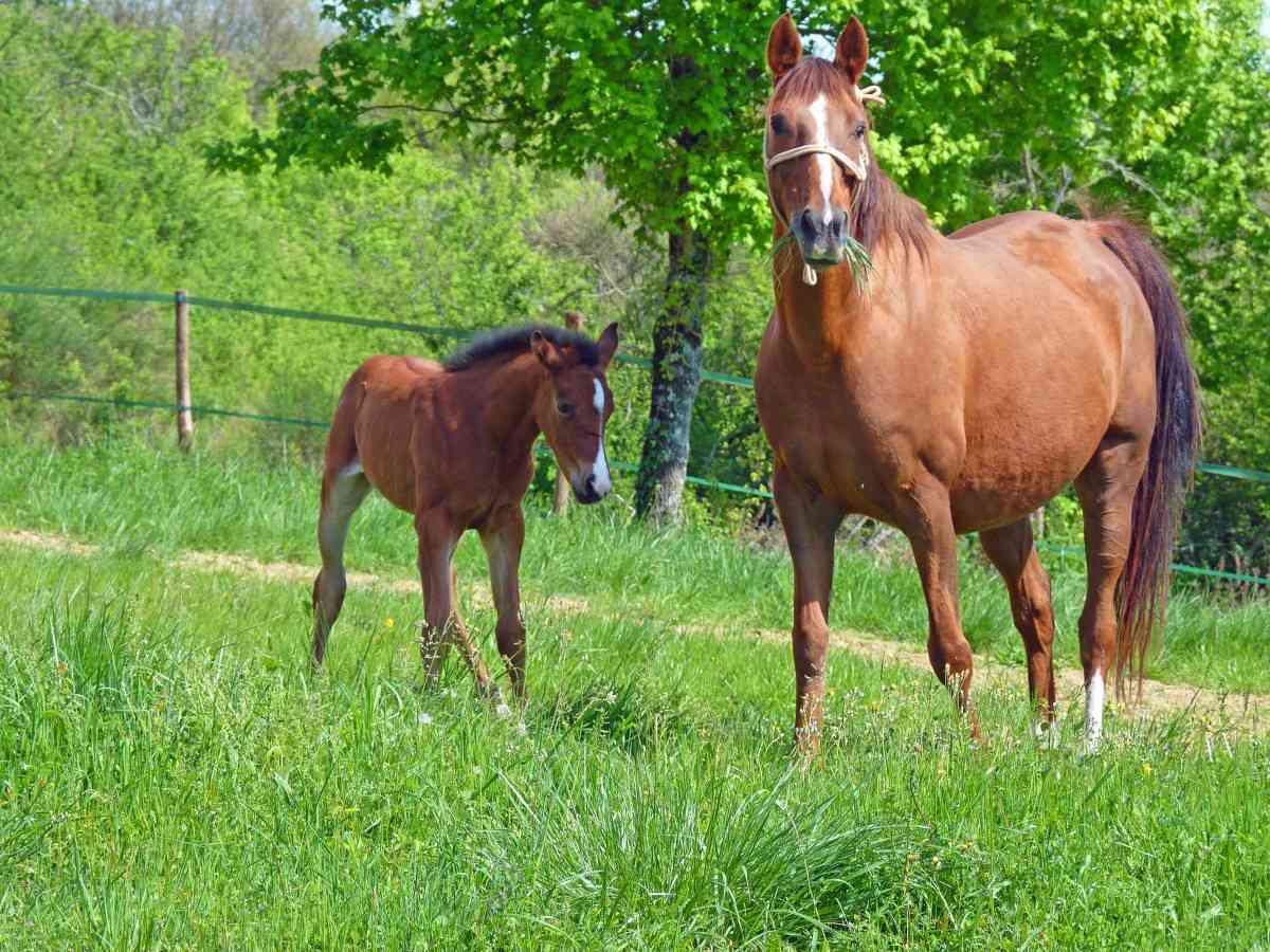 cuidado de caballos