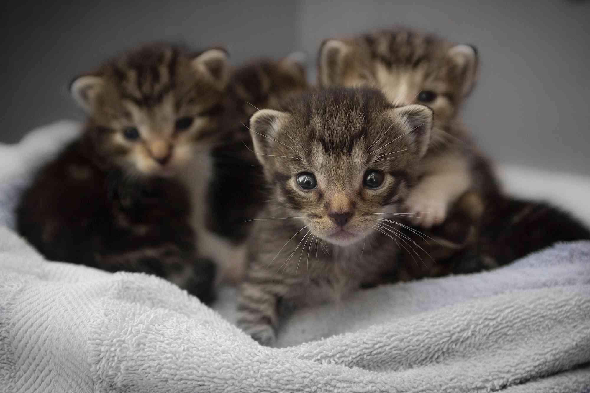 gatos cuquis