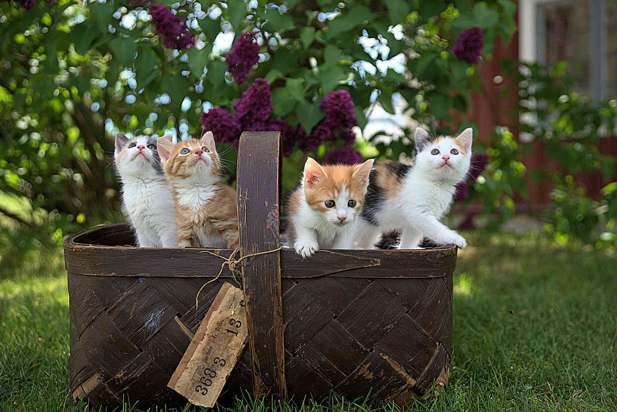 preciosos gatitos