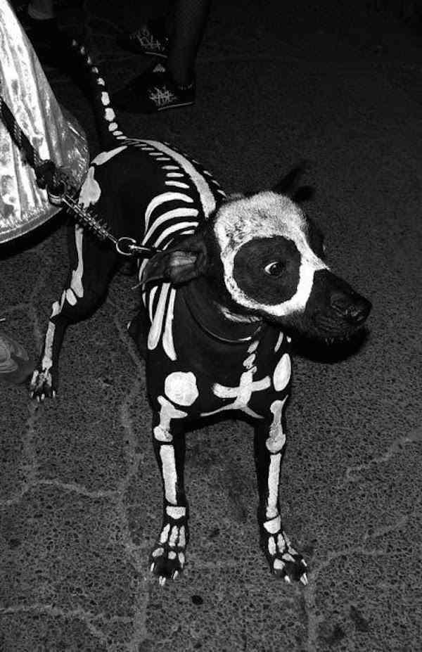 disfraces para tus mascotas