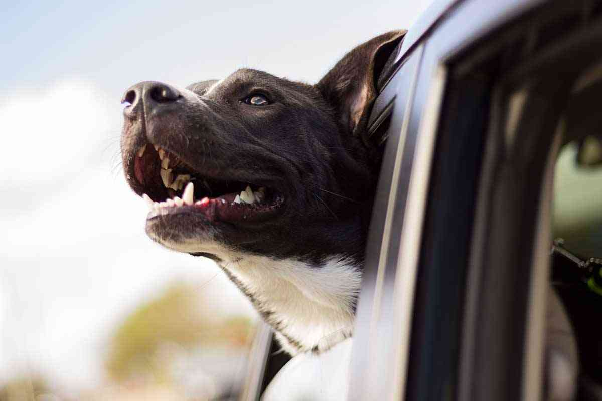 consejos a la hora de viajar con tu mascota
