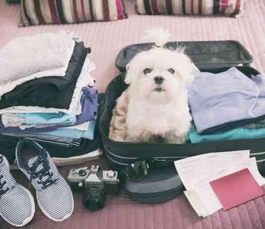 viajar con tu mascota