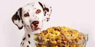 comida casera para perro