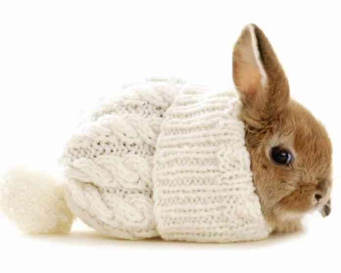 Cuidados de un conejo