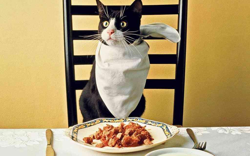 Comida casera para gatos