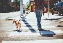 sacar a los perros
