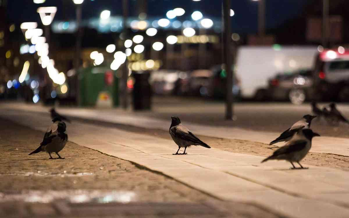 Curiosidades de las aves
