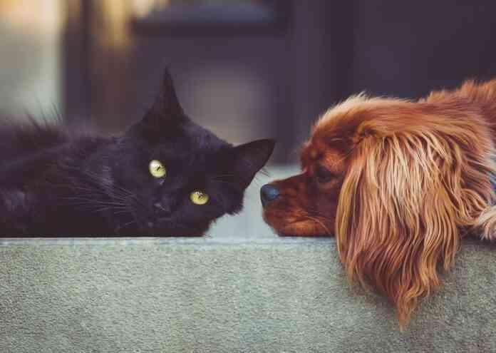 bienestar de las mascotas en navidad