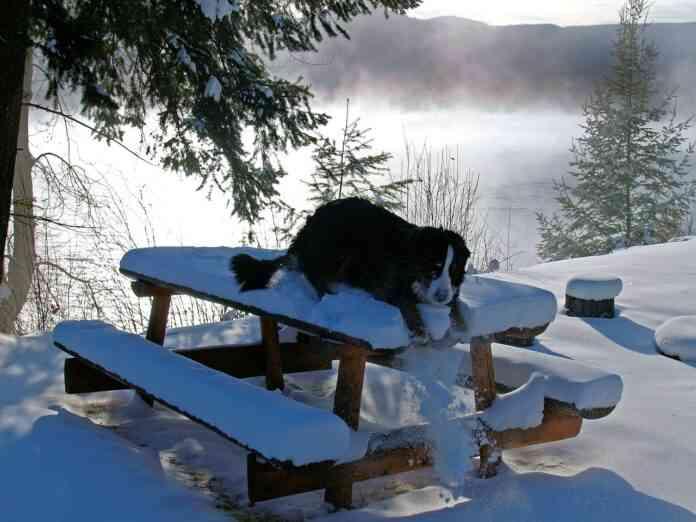 cuidado de perros invierno