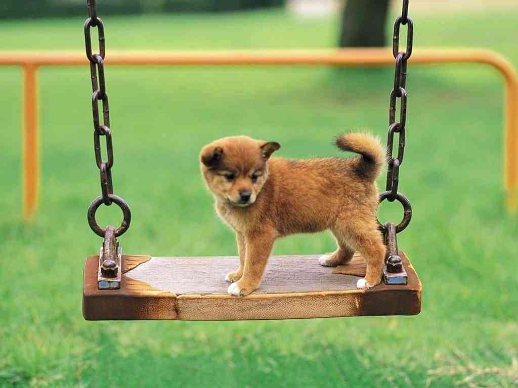 nombres para perros