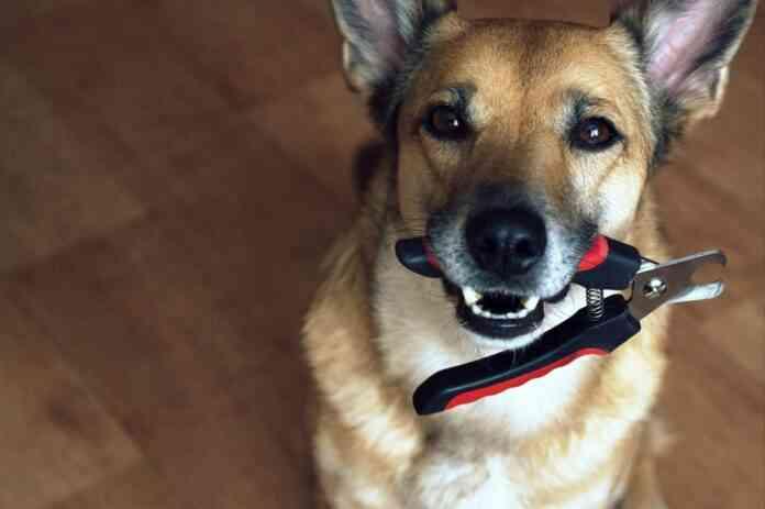 Cuidar las uñas de los perros