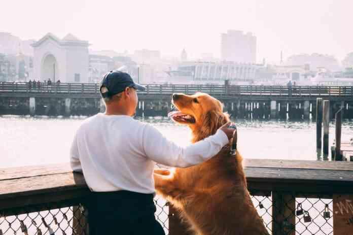 mitos y realidades acerca de la esterilizacion canina