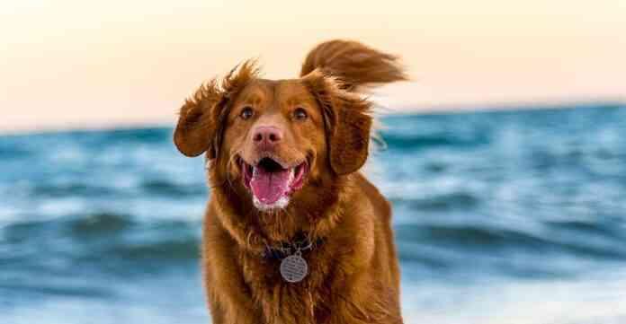 hiperactividad en perros