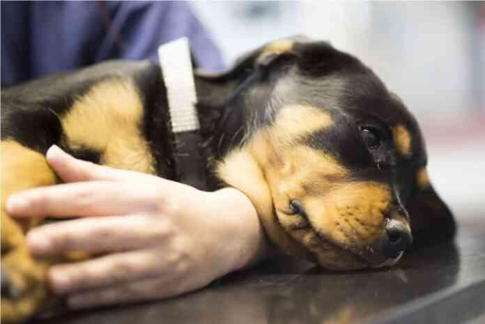 hora dormir perro