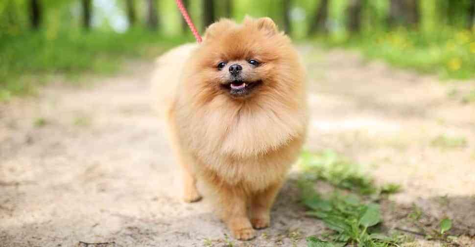 perros de pelaje largo