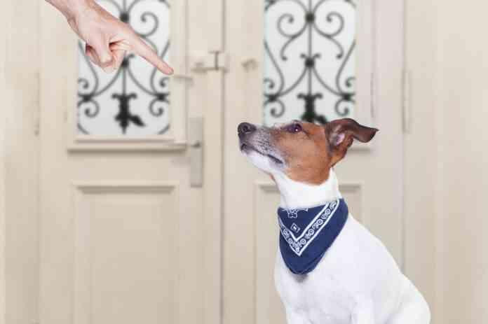 educar a los cachorros