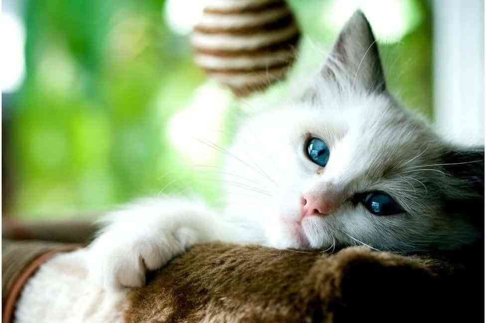 Curiosidades sobre los gatos