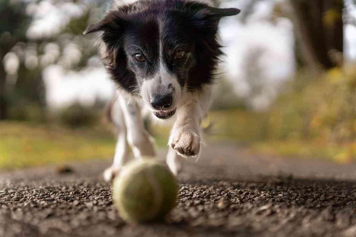 tipo adiestramientos caninos