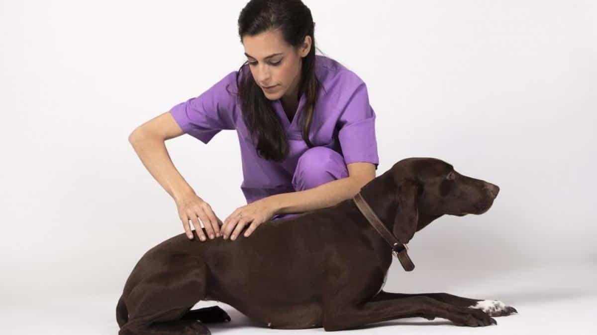 ¿Puede sufrir artritis reumatoide nuestra mascota?